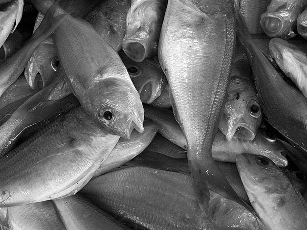 pescado un alimento con calcio